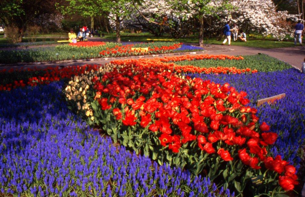 Парк цветов Keukenhof в голландии.